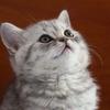 Meow ❤️のアイコン